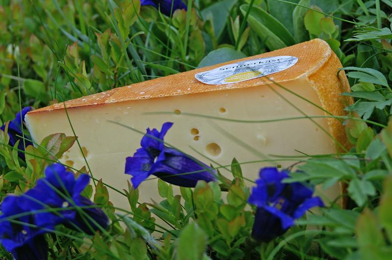 Käse auf Alpenwiese