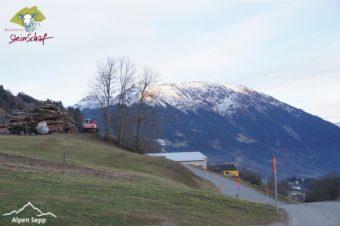 Steinschaf Montafon